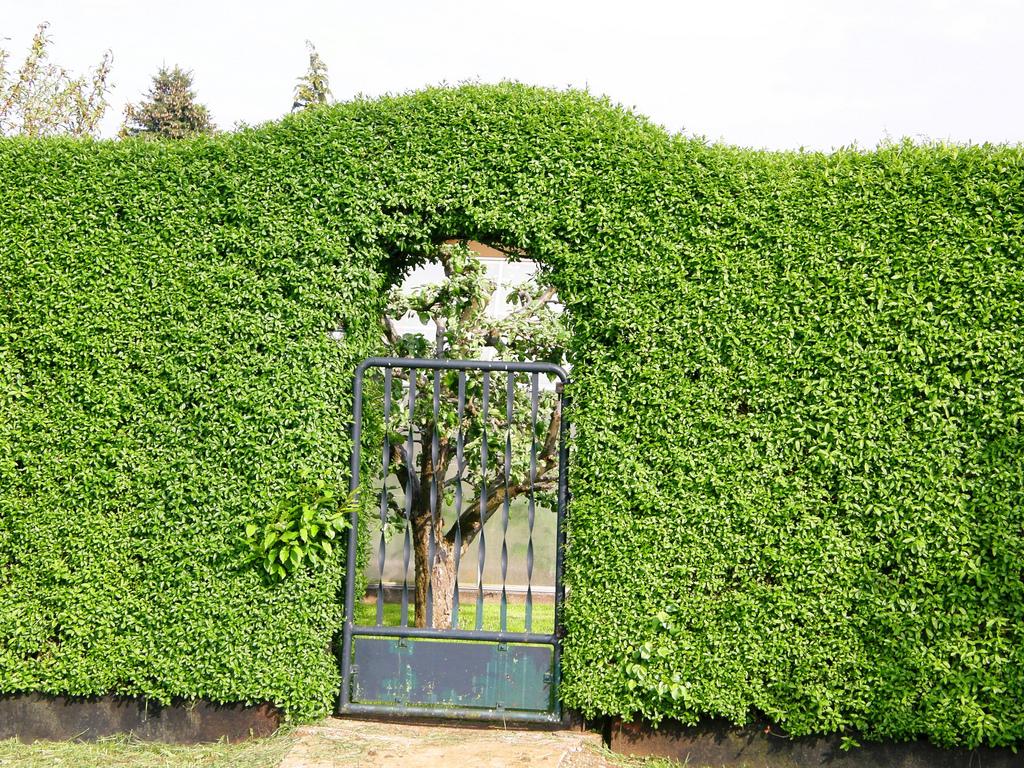 pflanzen sichtschutz terrasse